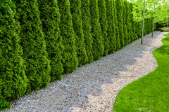 Formal garden with a path of small stones, hedgerow and green lawn Royalty Free Stock Images