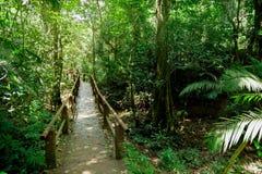 Formal Garden, Rainforest, Springtime, Summer, Tropical Climate stock images