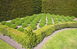 Formal lavender herb garden. English formal country garden estate with lavender herb garden surround by low box hedge. Lytes Cary Manor Royalty Free Stock Image