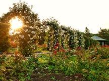 Formal rose garden Stock Photo