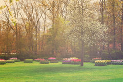 Formal spring garden Royalty Free Stock Image