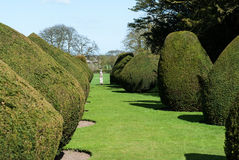 Formal topiary Stock Photography