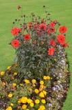 Formales englisches Blumenbett Stockbilder