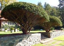 Formally landscaped stone wall terrace Royalty Free Stock Photo