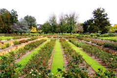 formalny Adelaide ogród Australia wzrastał zdjęcia stock