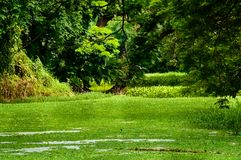 Formalny ogród lub gazon, krajobrazowy widok obraz stock