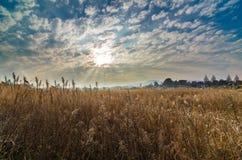 Formação bonita da nuvem e grama amarela secada Fotos de Stock Royalty Free