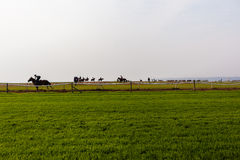Formação dos cavalos de raça Imagem de Stock Royalty Free