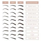 Formas da sobrancelha Vários tipos da testa Tabela de vetor com sobrancelhas e subtítulos Foto de Stock