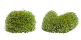 Formas de la hierba Fotografía de archivo libre de regalías