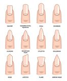 Formas diferentes do prego - tendências da forma das unhas ilustração stock