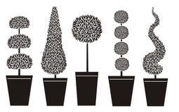 Formas do Topiary Fotografia de Stock