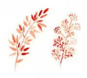 Formas florales Imágenes de archivo libres de regalías