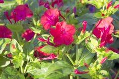 formatet för blomman för designeps-mappen inkluderar Royaltyfri Bild
