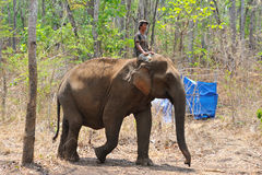 Formation d'éléphant, sanctuaire Photos stock