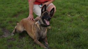 Formation d'un chien de berger avec un maitre-chien de chien sur l'extérieur d'herbe un jour ensoleillé clips vidéos