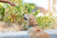 Formation de alimentation de chien Photos stock