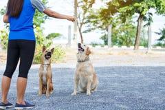 Formation de alimentation de chien Image libre de droits