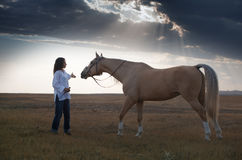 Formation de cheval image libre de droits
