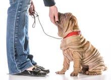 Formation de chien image stock
