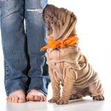 Formation de chien Image libre de droits