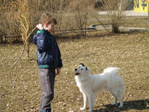 Formation de chien Photo libre de droits