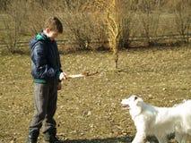 Formation de chien Photos libres de droits