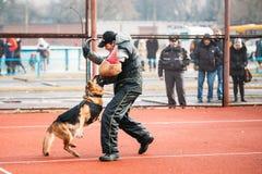Formation de chien de berger allemand dans Gomel régional Photographie stock libre de droits
