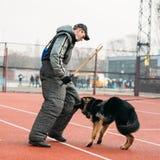 Formation de chien de berger allemand dans Gomel régional Images libres de droits
