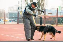 Formation de chien de berger allemand dans Gomel régional Image stock
