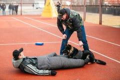 Formation de chien de berger allemand dans Gomel régional Photo stock