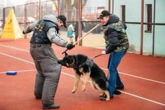 Formation de chien de berger allemand dans le club de sports régional de Gomel et le d Photo stock