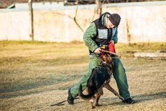 Formation de Dog de berger allemand Photos stock