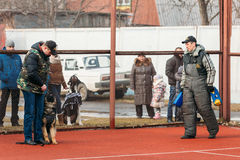 Formation de Dog de berger allemand Chien de Bitting Images libres de droits