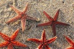 Formation de poissons d'étoile Images libres de droits