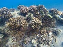 Formation de récif coralien Eau peu profonde de rivage exotique d'île Photo sous-marine de paysage tropical de bord de la mer Photos libres de droits