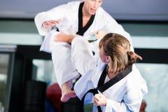 Formation de sport d'arts martiaux en gymnastique photo libre de droits