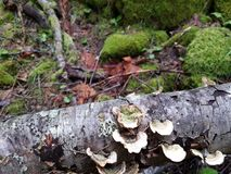 Formation des champignons Photos libres de droits
