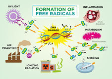 Formation of Free Radicals Concept. Editable Clip Art and jpg. Formation of Free Radicals Concept. Free Radicals Attacking DNA. Editable Clip Art and jpg royalty free illustration