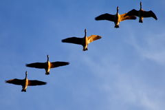 Formation - Pattern - Gliders Stock Photography