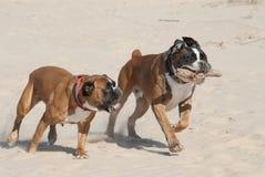 Formation pour des chiens Images stock