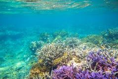 Formation violette et jaune de récif coralien sur le fond marin Chauffez la vue bleue de mer avec de l'eau propre et la lumière d Images stock