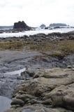 Formations de roche à marée basse sur la plage de Rialto en parc national olympique photographie stock libre de droits