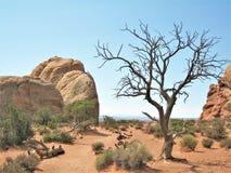Formations de roche au parc national de voûtes en Utah Photos libres de droits