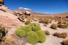 Formations de roche chez Salar de Uyuni, Bolivie photographie stock libre de droits