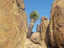Formations de roche de collines de vigne, parc national de grande courbure, Etats-Unis images libres de droits