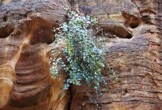 Formations de roche colorées de PETRA en Jordanie Photographie stock libre de droits