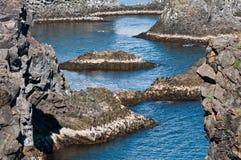 Formations de roche d'Arnarstapi de la côte de l'Islande Photographie stock