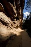 Formations de roche de Zion photographie stock libre de droits