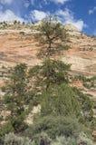 Formations de roche impressionnantes en Bryce Canyon National Park photos libres de droits